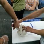 徒手医療協会セミナー|顎関節症の徒手的臨床
